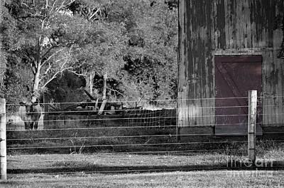 Photograph - Cow Barn And Red Door by Karen Adams