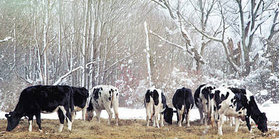 Photograph - Cow Butts by Natalie Rotman Cote