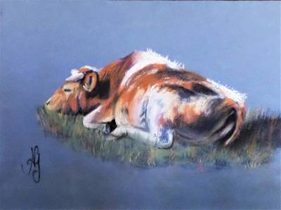 Pastel - Cow Dreams by Anne Gardner