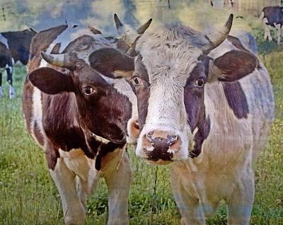 Cow Duo Art Print