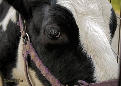Photograph - Cow Eyes by LeeAnn McLaneGoetz McLaneGoetzStudioLLCcom