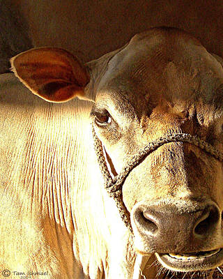 Cow Face Art Print by Tammy Ishmael - Eizman