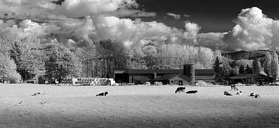 Photograph - Cow Farm by Bill Kellett