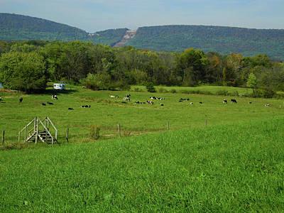 Photograph - Cow Farm On The At 2 by Raymond Salani III