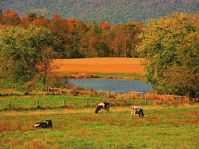 Photograph - Cow Farm On The At by Raymond Salani III