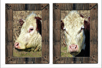 Photograph - Cow Framed by Tina M Wenger