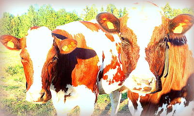 Cows Missing The Boys  Art Print by Hilde Widerberg