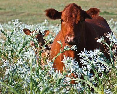 Cow Hide Art Print
