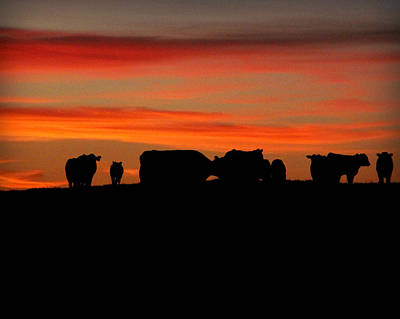 Photograph - Cow Hill At Sunset by Kathy M Krause