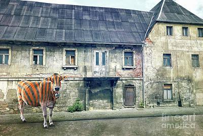Digital Art - Cow In Zebra Costume by Jutta Maria Pusl