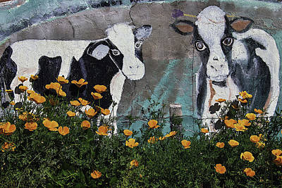 Cow Mural And Poppies Art Print by Garry Gay