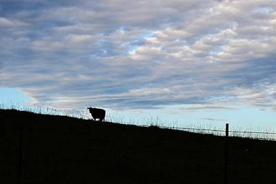 Photograph - Cow On A Hill by Eileen Brymer