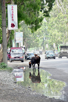 City Photograph - Cow On A Road by Svetlana Sewell