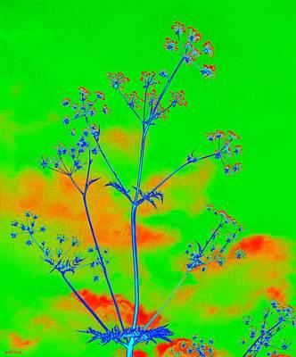 Cow Parsley Blossom 4 Art Print