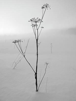 Keck Photograph - Cow Parsley Bw by Jouko Lehto