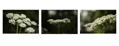 Photograph - Cow Parsley by Stewart Scott