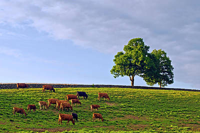 Photograph - Cow Pasture by David Freuthal