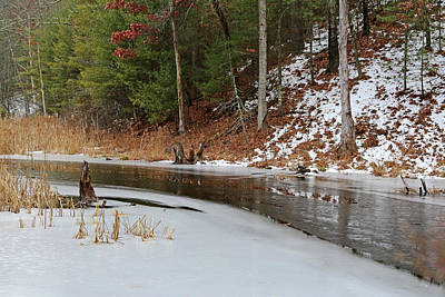 Photograph - Cow Pond Brook Massachusetts by Mary Bedy