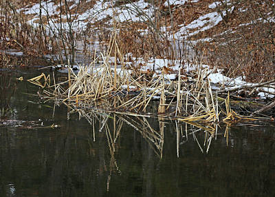 Photograph - Cow Pond Brook Reflections 1 by Mary Bedy