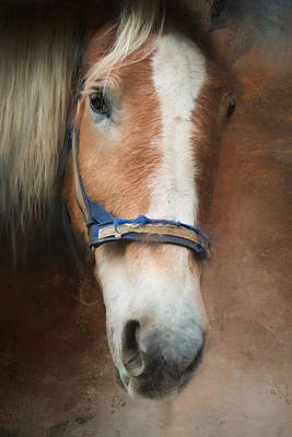 Art Print featuring the photograph Cow Pony by Robin-Lee Vieira