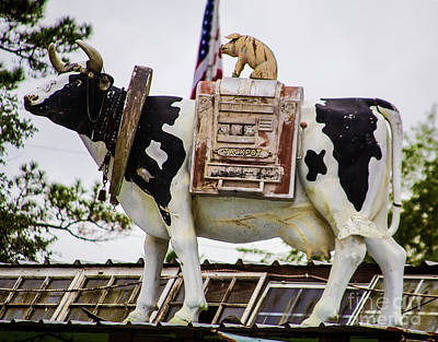 Photograph - Cow Riding Pig by Steven Parker