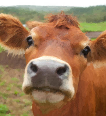 Cow Painting - Cow Selfie  #2 by William Mace