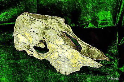 Photograph - Cow Skull 5 by Ronda Broatch