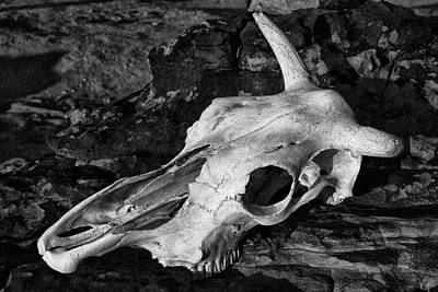 Photograph - Cow Skull by Sandra Selle Rodriguez