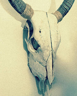 Photograph - Cow Skull, Vintage by Ronda Broatch