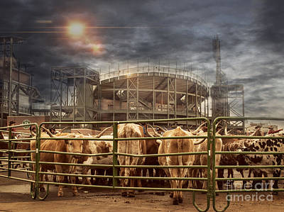 Cow Town Art Print by Juli Scalzi