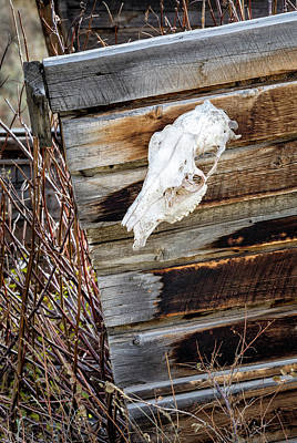 Photograph - Cowboy Cabin Adornment by Denise Bush