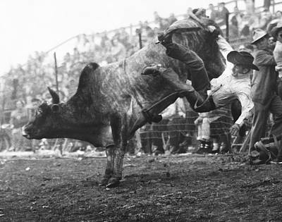 Photograph - Cowboy Departing A Bull by Underwood Archives