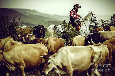 Photograph - Cowboy On Cattle Round by Dimitar Hristov