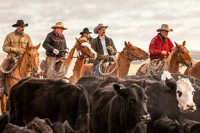 Angus Steer Photograph - Cowboy Posse by Todd Klassy