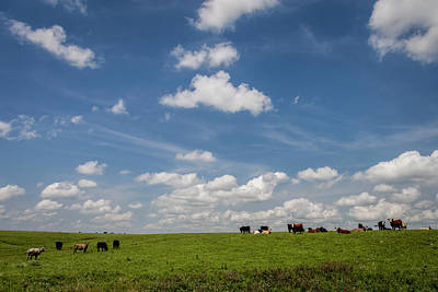 Photograph - Cowley County Cattle by Scott Bean
