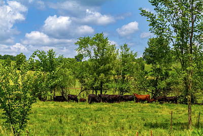 Photograph - Cows Along The Elroy-sparta Trail by Chuck De La Rosa
