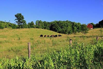 Photograph - Cows And Red Barn by Angela Murdock