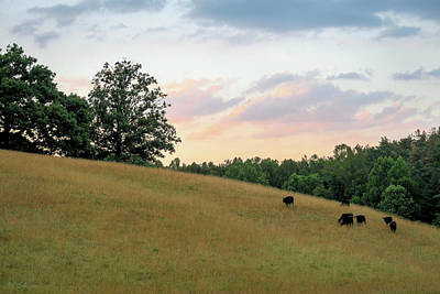 Photograph - Cows At Dusk by Brian Shepard