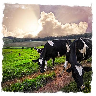 Photograph - Cows At Sunset Bordered by Debra and Dave Vanderlaan