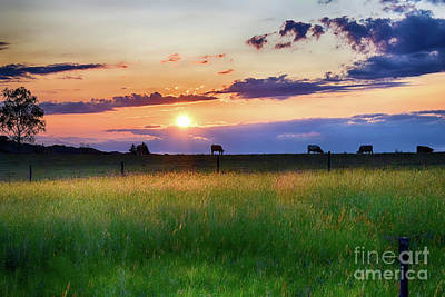 Photograph - Cows At Sunset by Nina Ficur Feenan