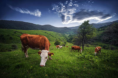 Cows Original by Bess Hamiti