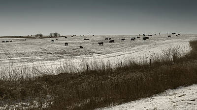 Photograph - Cows In A Snow Covered Field Nebraska by Art Whitton