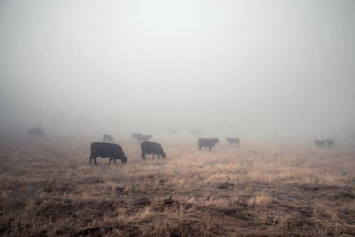 Photograph - Cows In Fog - Color by Alexander Kunz