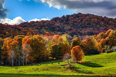 Photograph - Cows In Pomfret Vermont Fall Foliage by Jeff Folger