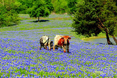 Photograph - Cows In Texas Bluebonnets by Kathy White