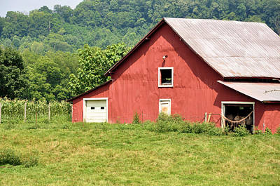 Cows In The Barn Art Print by Jan Amiss Photography