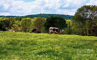 Photograph - Cows In The Meadow by Paul Mashburn