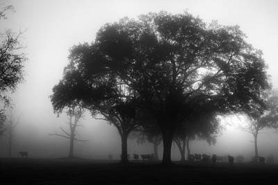 Cows In The Mist Art Print by David Mcchesney