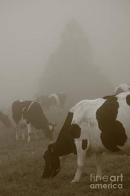 Azoren Photograph - Cows In The Mist by Gaspar Avila