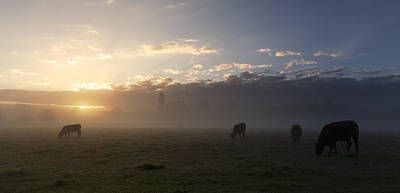 Photograph - Cows In The Mist by Ian Merton